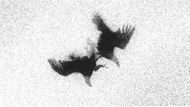 Herabfliegende Adler